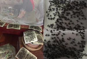 Hãi hùng cảnh ăn cơm trong màn, 'sống chung' với ruồi do Cty Hòa Phát gây ô nhiễm