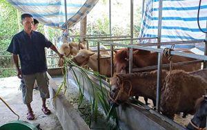 Tiếp sức giúp nông dân thoát nghèo