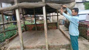An Giang: Hàng loạt bò nuôi chết đột ngột vì bệnh lạ