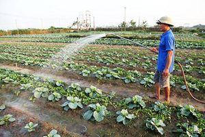 Thừa thiên – Huế: Thành công nhờ nông nghiệp sạch
