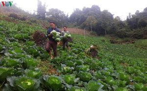 Lào Cai - Sáng tạo cho nông thôn mới thêm bền vững