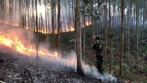 Phú Yên: Lãnh 6 năm tù vì gây ra vụ cháy gần 168 ha rừng