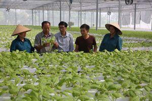 Hiệu quả từ nông nghiệp công nghệ cao