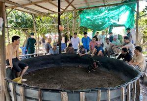 Tụ điểm đánh bạc núp bóng chọi gà truyền thống trên đảo Vĩnh Nguyên