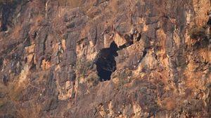 Hé lộ nguyên nhân 4 người bị mắc kẹt trong hang đá núi Hài