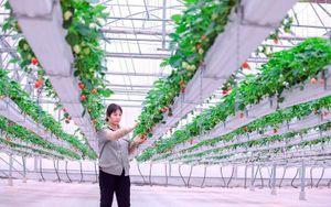 Vĩnh Phúc ứng dụng khoa học kỹ thuật phát triển nông nghiệp