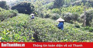 Phát triển Chương trình OCOP, tạo đà cho huyện Triệu Sơn 'cất cánh' trên 'đường băng' nông thôn mới