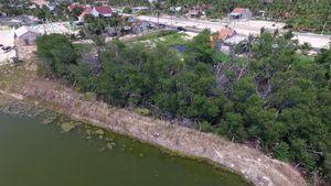 Văn hóa phản ánh vụ rừng bần ở Khánh Hòa bị 'xóa xổ': UBND tỉnh chỉ đạo kiểm tra, xử lý nghiêm sai phạm