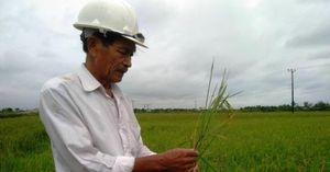 Quảng Trị: Gần 2.000 ha lúa bị sâu bệnh gây hại