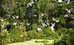 Những người mê chim trời