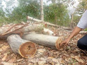 Bình Dương thông tin vụ rừng trong khu di tích bị 'tàn phá'