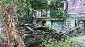 Mưa dông lớn gây hư hại nhà cửa, hệ thống điện gãy đổ