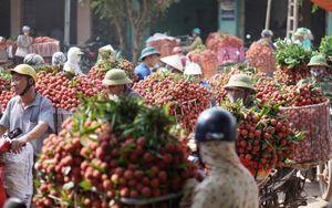 Bắc Giang: Lần đầu tiên tổ chức hội nghị trực tuyến xúc tiến tiêu thụ vải thiều