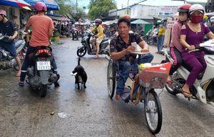 Chú chó ngậm vé số theo chủ tật nguyền mưu sinh ở Phú Quốc 'đốn tim' dân mạng