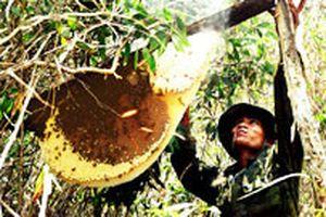 'Đạo ăn ong' và tập đoàn phong ngạn