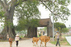 Dân làng Đường Lâm chưa hài lòng