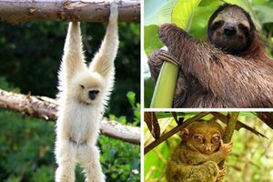 Top động vật 'leo cây' dễ thương nhất thế giới