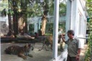 Rủi ro nghề quản thú - Kỳ 1: Khó như chăm cọp luyện voi