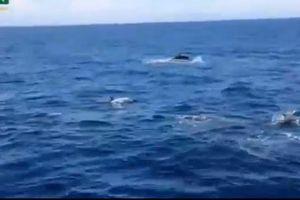 Xúc động chứng kiến đàn cá heo hộ tống tàu CSB VN