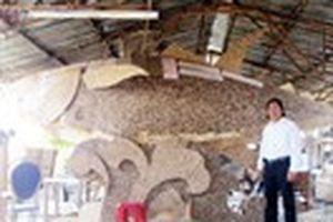 Tự tạo cơ hội - Kỳ 40: Biến gáo dừa thành kỷ lục