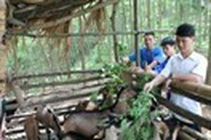 Tiến tới Đại hội Hội LHTN Việt Nam lần thứ 7: Bám rừng lập nghiệp