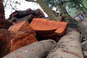 Ông Phạm Quang Nghị: Không né tránh xử lý vụ chặt cây xanh!