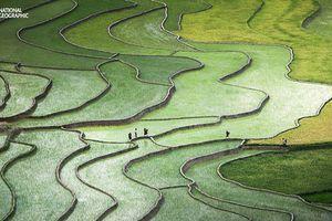 Tuyệt đẹp thung lũng Tú Lệ trong cuộc thi ảnh National Geographic
