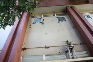 Trường học 'đau đầu' vì ong làm tổ
