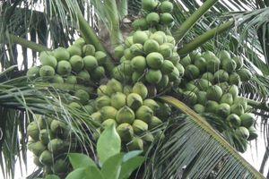 Nông dân trồng cây ăn trái siêu quả tham gia triển lãm