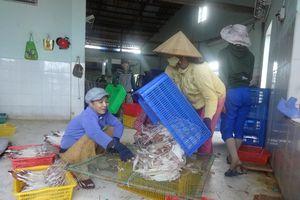 Tổng điều tra nông thôn nông nghiệp và thủy sản năm 2016