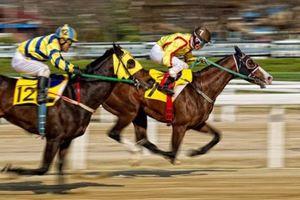 G.O Max tái khởi động dự án trường đua ngựa tại Vĩnh Phúc