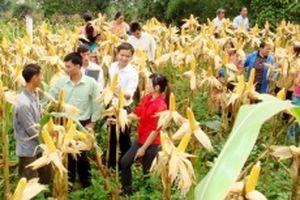 Lào Cai tập trung đầu tư phát triển vùng đồng bào dân tộc thiểu số