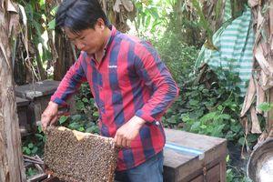 Khởi nghiệp từ nuôi ong