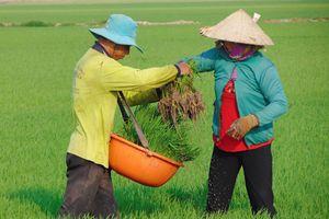 Thời tiết tuần sau: Nắng nóng không gay gắt, đề phòng sâu rầy trên các trà lúa