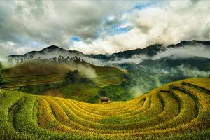 Tây Bắc mùa lúa chín rực rỡ sắc vàng trong ảnh 'Dấu ấn Việt Nam'
