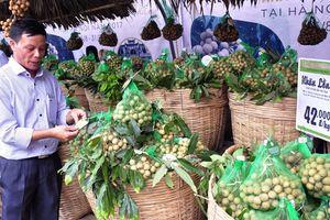 Doanh nghiệp bán lẻ Hà Nội sẽ tiêu thụ 100 tấn nhãn lồng Hưng Yên