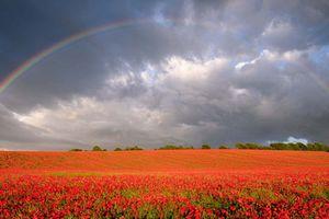 Những khoảnh khắc không dễ tìm về vẻ đẹp của tự nhiên