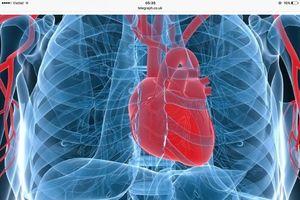 Xét nghiệm máu nhanh giúp chẩn đoán nhồi máu cơ tim trong 20 phút