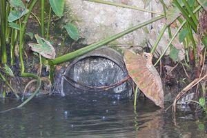 Thừa Thiên-Huế: Dân khốn khổ vì Công ty Phú Song Hường xả thải gây ô nhiễm