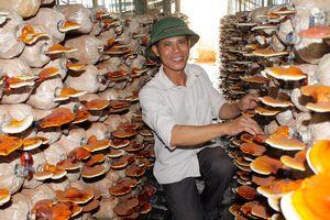 Đam mê làm giàu với nấm