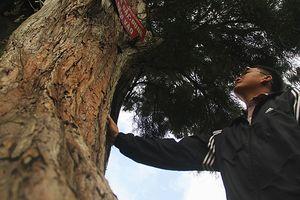 Dựng chòi giữ rừng 'ngàn năm' tuổi