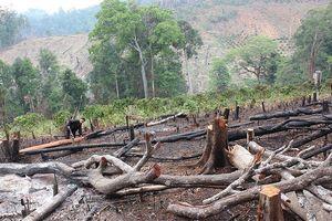 Truy tố phó giám đốc công ty lâm nghiệp giao rừng trái quy định