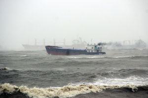 Không để xảy ra thảm họa về môi trường trên vùng biển Quy Nhơn
