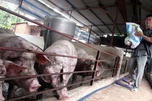 Gặp khó, Hội Chăn nuôi 'cầu cứu' Thủ tướng