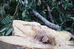 Thanh Hóa: Đã xác định được đối tượng phá rừng ở Xuân Chinh