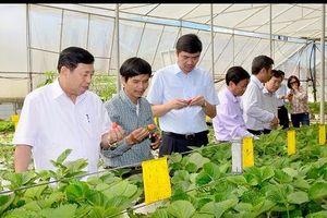 Doanh nghiệp, địa phương tâm tư về phát triển nông nghiệp công nghệ cao