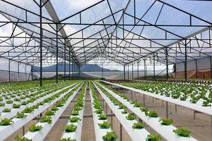 Đẩy mạnh ứng dụng công nghệ nano vào nông nghiệp sạch
