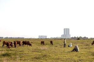 Ưu tiên phát triển đô thị vệ tinh Hòa Lạc