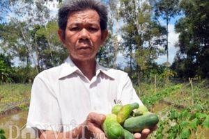 Cà Mau: Dân vùng ngọt hóa Trần Văn Thời điêu đứng vì ngập 1 tháng