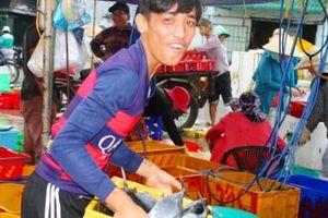 Ninh Thuận: Bão tan, thương lái tươi cười vì tàu thuyền no cá